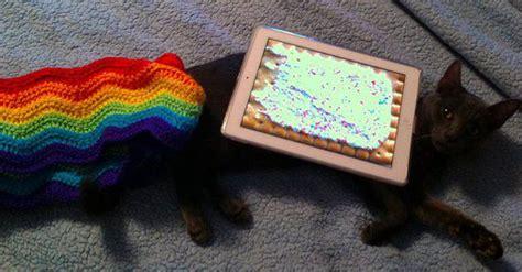 rip marty  inspiration  nyan cat