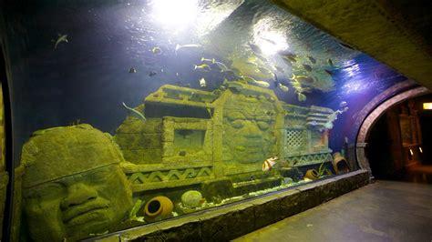 downtown aquarium  houston texas expedia