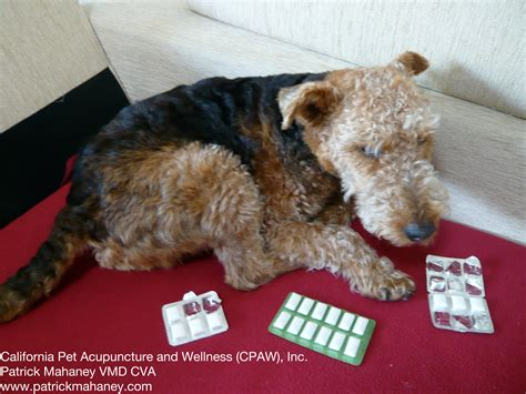 canine toxicity  sugarless chewing gum