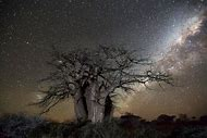 Beth Moon Photography Ancient Trees