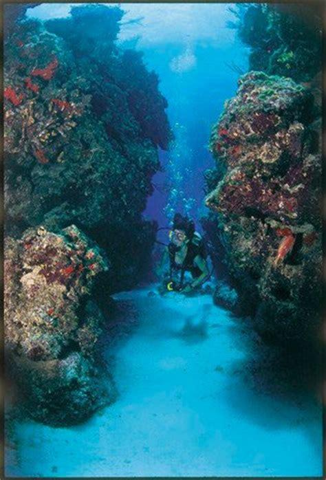 diving bimini bahamas bimini undersea
