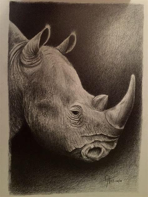 Rhino Drawing In Pencil On Behance