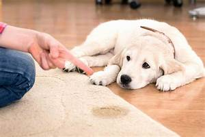 Fresh how to stop my dog peeing in the house dogs world for How to train your dog to pee