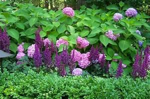 Welche Pflanzen Passen Gut Zu Hortensien : perennial combinations plant combinations summer borders ~ Lizthompson.info Haus und Dekorationen