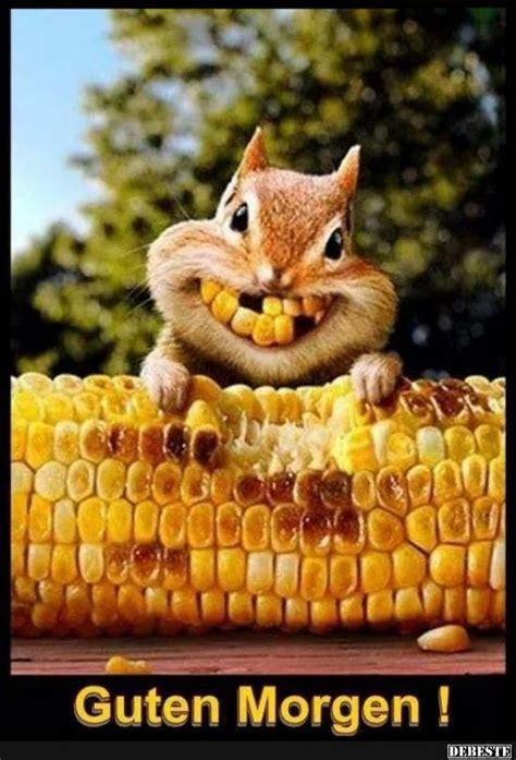 guten morgen lustige bilder sprueche witze echt lustig