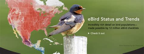 cornell bird watching website birds