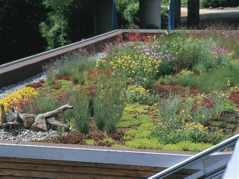 Dachbegruenung Natuerliche Klimaanlage by Raum F 252 R Natur Dachbegr 252 Nung K 252 Hlt Und Filtert