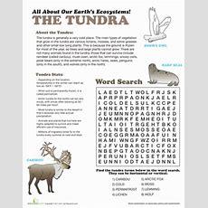 Tundra Ecosystem  Worksheet Educationcom
