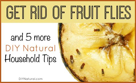get rid of fruit flies and 5 more diy home solutions