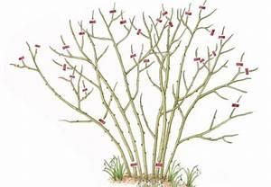 Rosen Schneiden Frühling : rosen schneiden in 4 schritten garten pflege rosen schneiden rosen und garten ~ Watch28wear.com Haus und Dekorationen