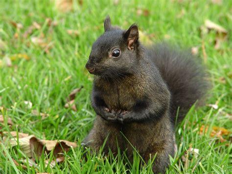 treknature toronto squirrel photo