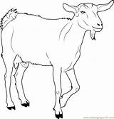 Goat Coloring Printable Walking Farm Goats Animals Animal Colouring Coloringpages101 Chin Ages Adult Pdf Doghousemusic sketch template
