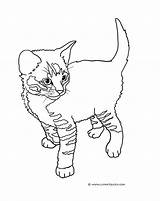 Coloring Cat Pages Kittens Kitten Tabby Drawing Colouring Cats Printable Drawings Sheet Touch Clip Colorin Standing Playing Striped Getdrawings Getcolorings sketch template