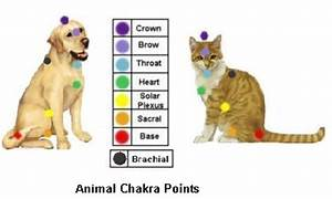 Animals Chakra Points And Energy Healing