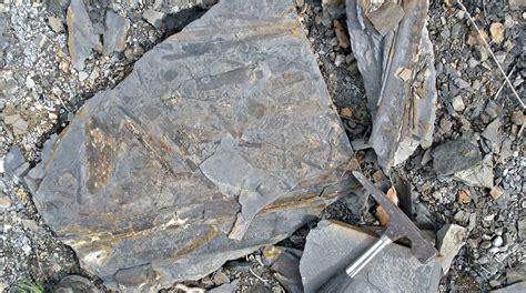 fossilguycom carboniferous fossil hunting site