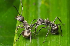 Wie Bekämpfe Ich Ameisen : ameisen bek mpfen im garten haus ~ Whattoseeinmadrid.com Haus und Dekorationen