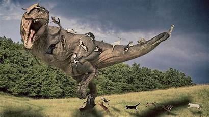 Rex Tyrannosaurus Indominus Spinosaurus Vs Wallpapers Jurassic