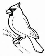 Birds Coloring Printable Pages Children sketch template