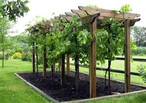Grape Arbor Trellis Design