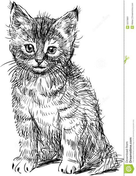Sitting Kitten Stock Vector Illustration Of White, View