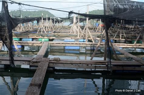 fish farming planet feed future malaysian coast farm