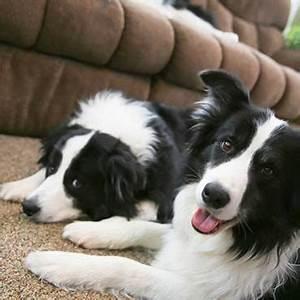 Hundehaare Vom Sofa Entfernen : die bosch pro animal tierhaarstaubsauger tierisch wohnen ~ Bigdaddyawards.com Haus und Dekorationen