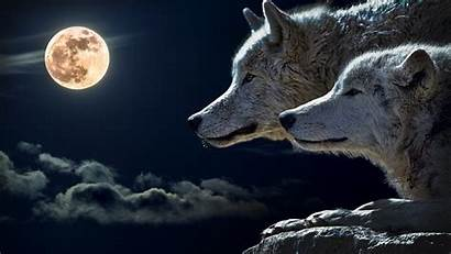 4k Wallpapers Moon Ultra Wolves
