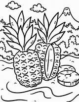 Tropical Coloring Island Pineapple Pages Drawing Wild Printable Drawings Ellis Designlooter Getcolorings 92kb 777px Getdrawings sketch template