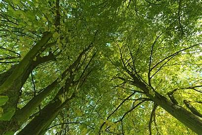 Trees E360 Yale Sentient Wohlleben Hidden Environment