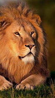 Animals Wallpapers wallpaper Android phone Animals ...