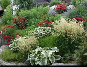 Hortensien Kombinieren Mit Anderen Pflanzen : rote rosen und rote bl ten mit anderen pflanzen kombinieren ~ Eleganceandgraceweddings.com Haus und Dekorationen
