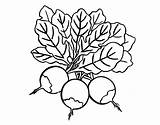 Beets Beet Template Coloring Pages sketch template