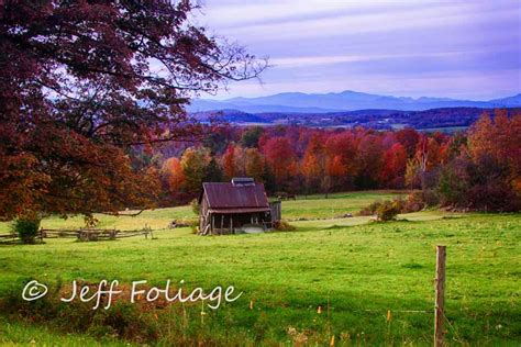 Jeff Foliage Contest Winner For June Announced