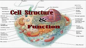 Cell Structure  U0026 Function For Aipmt Bhu Aiims
