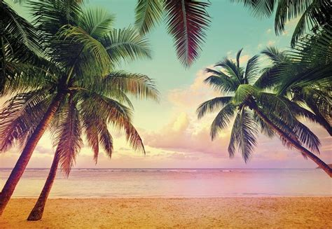 Giant Paper Wallpaper 368x254cm Miami Beach Palms Iphone Wallpapers Free Beautiful  HD Wallpapers, Images Over 1000+ [getprihce.gq]