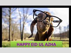 Bakra Eid Mubarak Wallpaper Auto Kfz Info