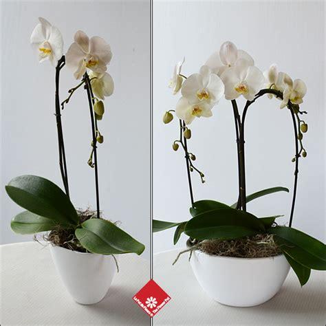 fleurs 233 raires condol 233 ances montr 233 al 183 le pot de fleurs