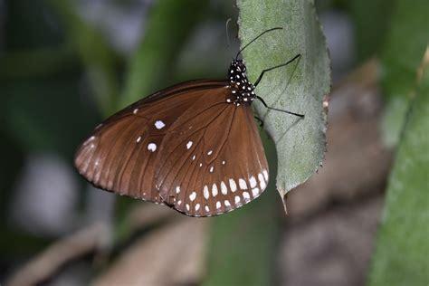 kleiner schmetterling kleiner schmetterling foto bild tiere tierdetails makros tieren un bilder auf
