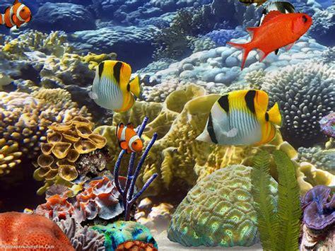fish wallpaper 50 best aquarium backgrounds free premium templates Tropical