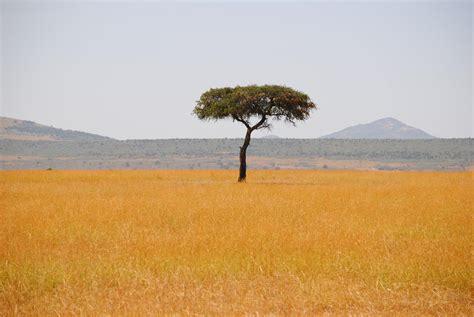 delta cuisine el mejor árbol de la sabana