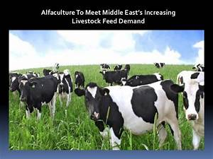Alfaculture To Meet Middle East's Increasing Livestock ...