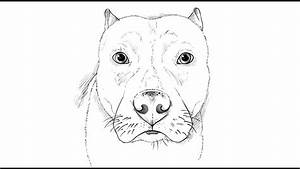 How to draw a Pitbull Dog - YouTube