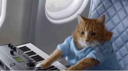 Viral Cat Keyboard Meme Memes Business Play