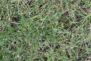 Was Tun Gegen Maulwürfe Im Rasen : 150m maulwurfnetz schutznetz gegen maulwurf ~ Lizthompson.info Haus und Dekorationen