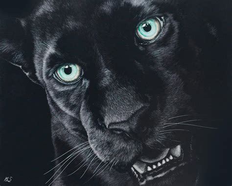 Black Jaguar Animal Hd Wallpapers - jaguar wallpapers wallpaper cave