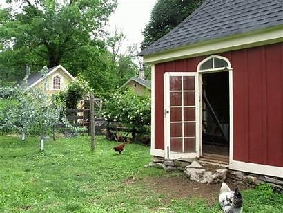 Ny Hen Farm Backyard Chickens Newburgh Summer