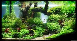 Co2 Rechner Aquarium : de woy flowgrow aquascape aquarium database ~ Orissabook.com Haus und Dekorationen
