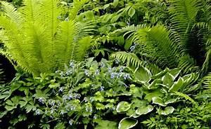 Was Blüht Im Schatten : die 25 besten ideen zu schattengarten auf pinterest schattenlandschaftsbau schattenspendende ~ Markanthonyermac.com Haus und Dekorationen