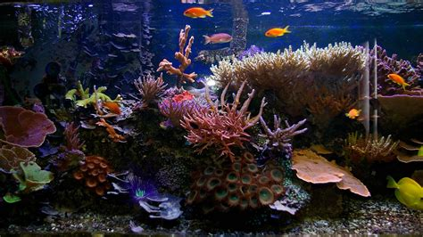fish aquariums fish for aquariums aquarium design ideas