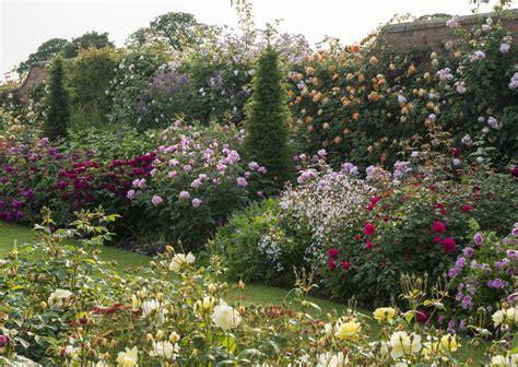 david garden roses nursery visit david austin roses in shropshire gardenista